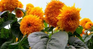 صورة صور زهور حلوة , اجمل الصور لاحلى زهووور