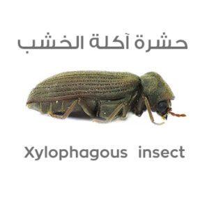 اسماء الحشرات بالصور