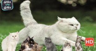 كيف اتكلم مع القطط , اذا كان لديك قطط فتعلم معنا لغة القطط