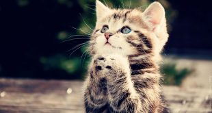 موضوع عن القطط , تعرف على القطط وانواعها