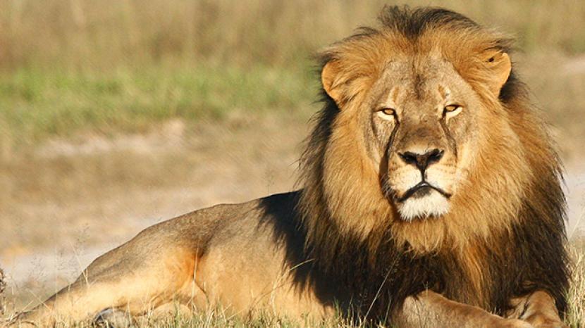 بالصور اجمل الصور للحيوانات , شاهد اروع صور لحيوانات الطبيعة
