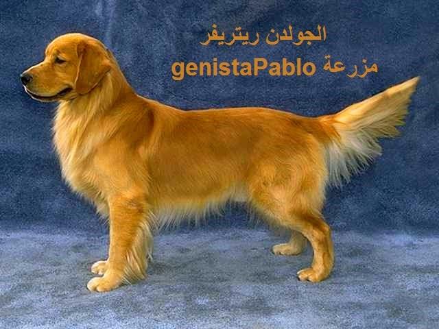 صورة احسن انواع الكلاب , تعرف على افضل انواع الكلاب بالصور
