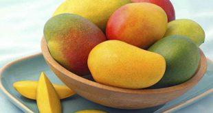 فوائد واضرار المانجو , معلومات عن فاكهة المانجو