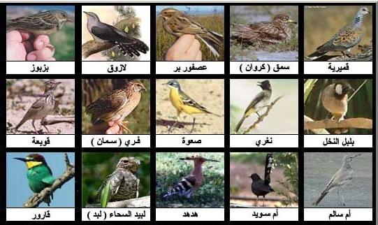 صور من الطيور مكون من 10 احرف , ما هى الطيور ب 10حروف