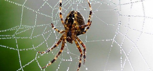 صورة انواع الحشرات واسمائها , تعرف على الحشرات واسمائها