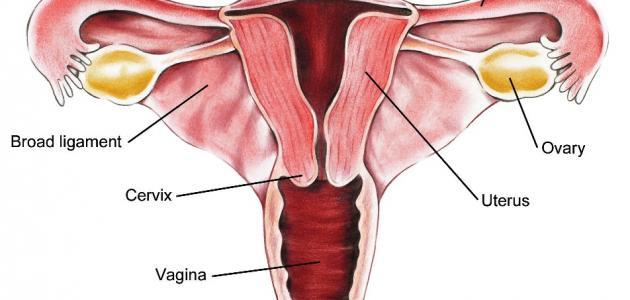 صورة اسباب تضخم الرحم , معلومات عن تضخم الرحم