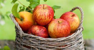 بالصور فوائد التفاح للتخسيس , احرقي الدهون بالتفاح السحري