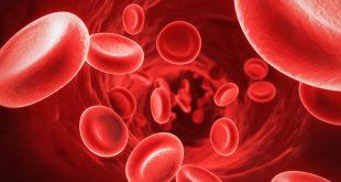 صور بحث حول الدم , كل ما تريد معرفته عن الدم ومكوناته