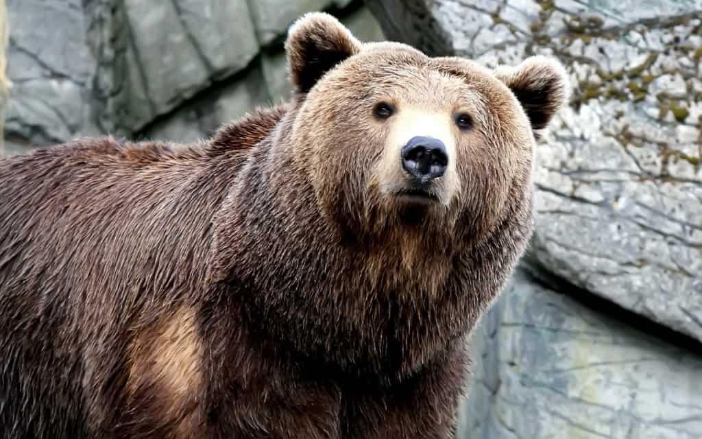 صورة تفسير الاحلام دب , ماذا تعنى رؤية الدب فى المنام