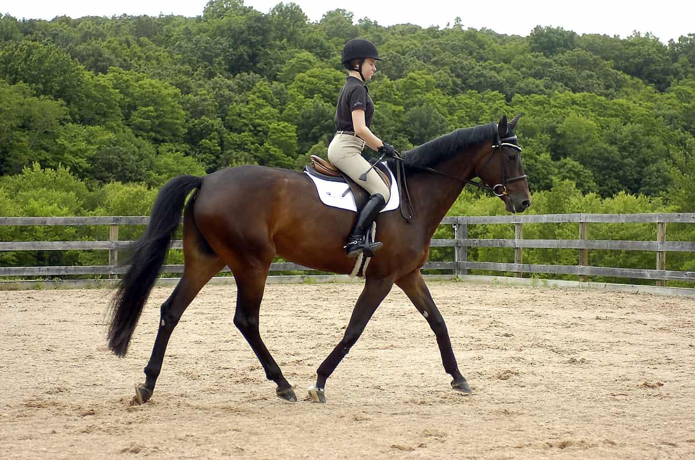 صورة تفسير الاحلام ركوب الخيل , ماذا يعنى ركوب الحصان فى الحلم