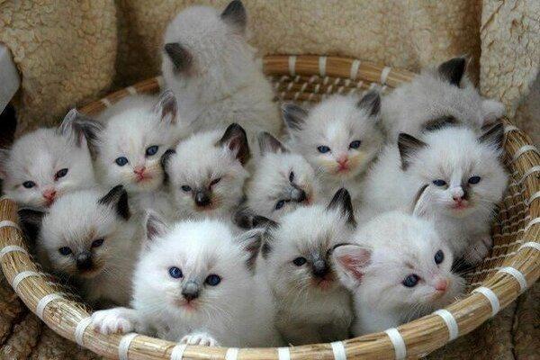 صور رؤية القطط الصغيرة في المنام , ماذا تعنى صغار القطط فى الحلم