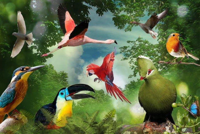 صورة معلومات عن الطيور وانواعها , معلومات وانواع الطيور فصائل نادرة ومتميزة