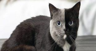 تفسير القطط الصغيرة في المنام , اطمن القطة الصغيرة فال خير وبشرى حسنة