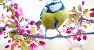 صورة شرح قصيدة شدو طائر , ابسط فهم لقصيدة شدو طائر 7042 1 310x165