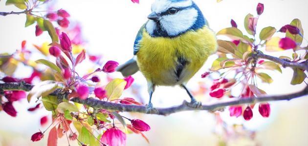 صور شرح قصيدة شدو طائر , ابسط فهم لقصيدة شدو طائر