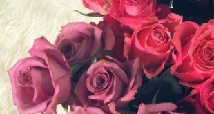 صور تمبلر ورد طبيعي , انواع الورد واهميته
