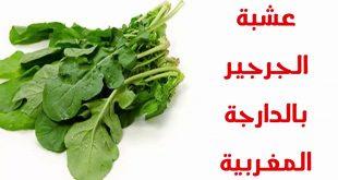 صورة ماهو الجرجير بالمغربية , معنى الجرير باللهجة المغربية