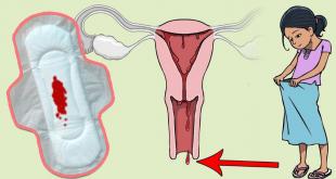 صورة ما معنى الدورة الشهرية , ما هى الدورة الطمثية عند النساء
