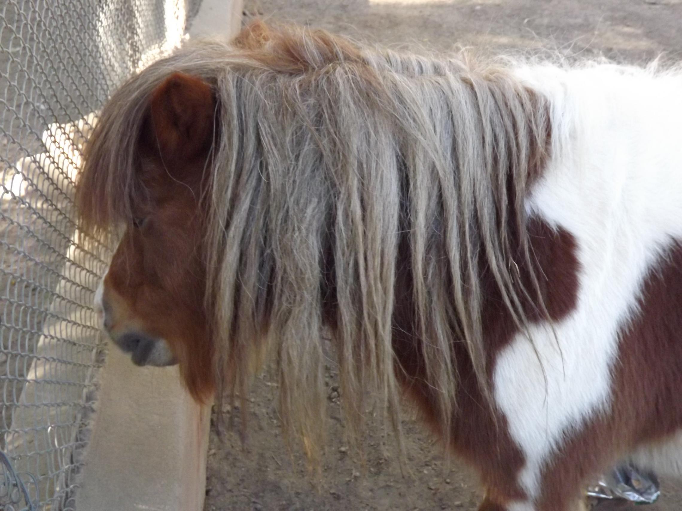 صورة اسم صغير الحصان , صفات صغير الحصان وانواعه