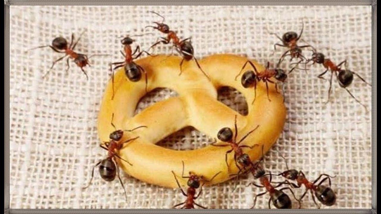 صورة علاج النمل بالقران , حكم التخلص من النمل بالقران