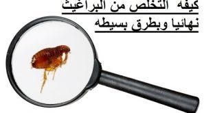 صور وصفة طبيعية للتخلص من البراغيث , طريقة فعالة للتخلص من البراغيث