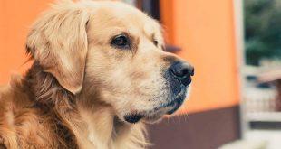 صور الكلاب في المنام لابن سيرين , دلالات الكلب فى الحلم