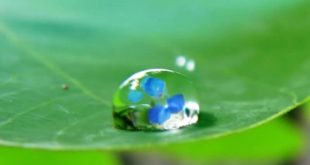 صورة صور قطرات ماء , البوم لصور المياة