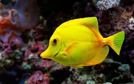 صور سمك ملون , اسماك زينة حلوة - اغراء القلوب