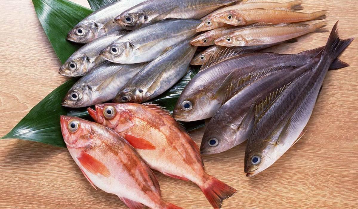 صورة كيفية معرفة السمك الطازج بالصور , صور توضح السمك الفريش