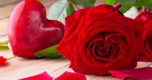 صورة اجمل الصور الورود , صور زهور طبيعية