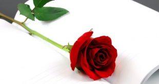 صورة صور ورد احمر حب , ورد رومانسي جدا