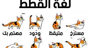 صورة حركات القطط ومعانيها بالصور , اجمل صور القطط بحركاتها المضحكه