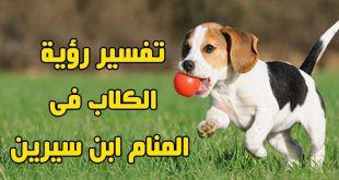 صورة حلم عضة الكلب , ماهو تفسير ؤرية عضة الكلب في المنام