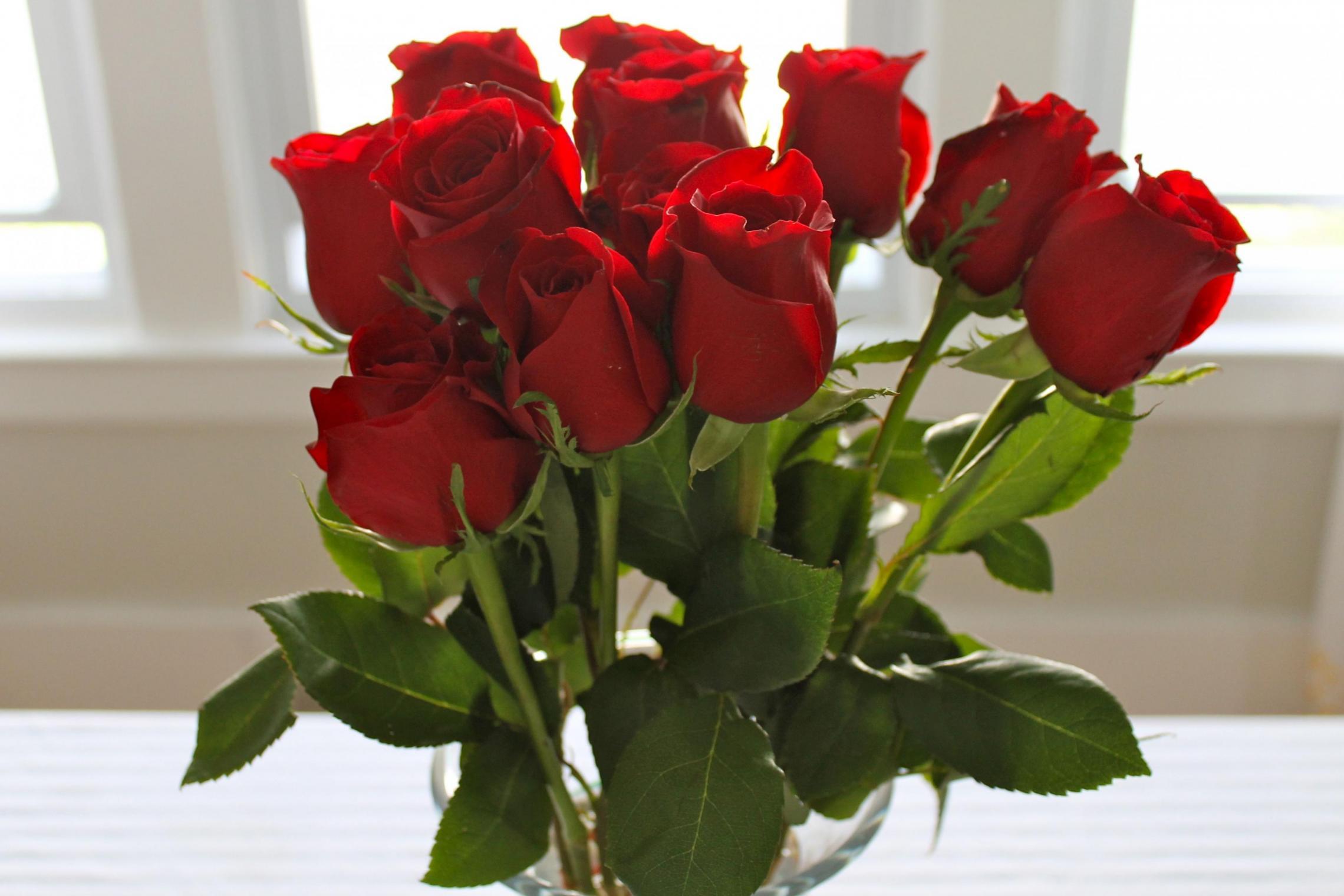 صورة صور اجمل وردة حمراء , ورود حمراء خلابة بالصور
