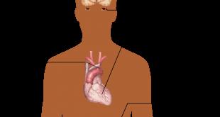 صورة ما هو ضغط الدم , مالاتعرفه عن ضغط الدم للانسان
