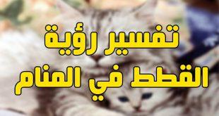 صورة تفسير رؤية القطط في الحلم , خربشة القطة في المنام .