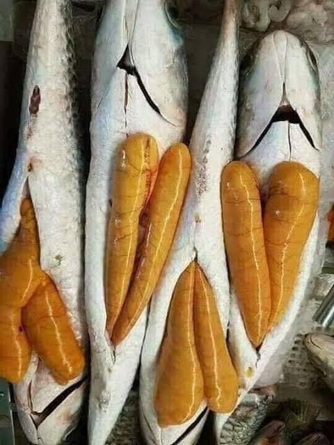 صورة فوائد بيض السمك , نظرا لسعرها الغالى تحتاج لنظام مالى