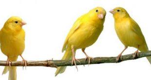 صورة عصافير ملونة جميلة , ارق العصافير فى اروع البساتين