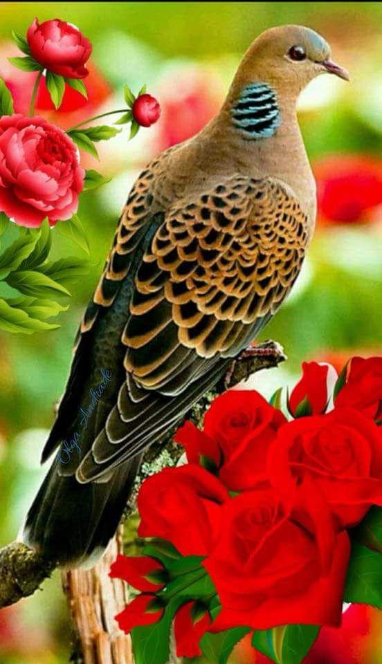 صورة اجمل طيور بالعالم , متع عينك بما خلقه ربك