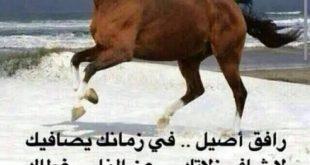 صورة ابيات في مدح الصديق , صداقتى تحلو بنسيان اليوم والبدء فى الغد