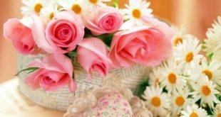 صورة موضوع عن الورد , مهما طال الود لا يحلو إلا بالانسجام مع الورد