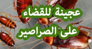 صورة هوريكي خلطة متشوفيش بعدها صرصار , كيفية القضاء على الصراصير