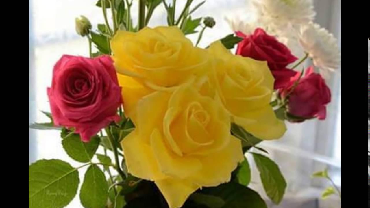 صورة شاهد اجمل ورد وازهار ،اجمل الزهور والورود