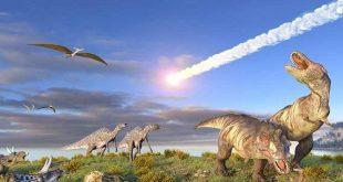 صورة لماذا تختفي بعض الحيوانات من الوجود ،اسباب انقراض الحيوانات