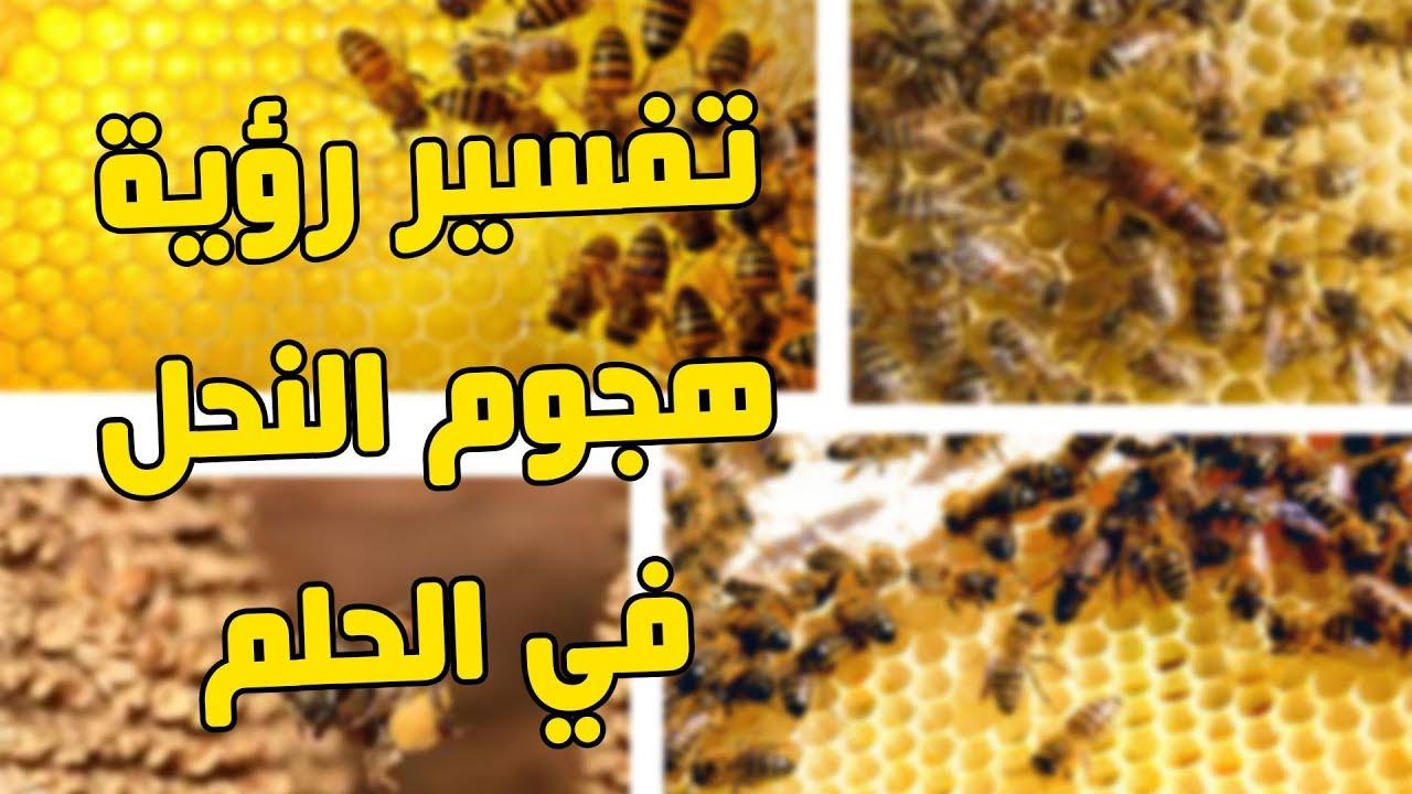 صورة رأيت النحلة تلدغني في الحلم، لسعة النحل في المنام