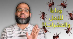 صورة تخلصي من إزعاج النمل في البيت ،لطرد النمل من المنزل