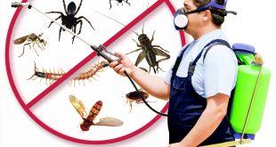 صورة تخلص من الحشرات والفئران مع عروض شركاتنا المميزة، افضل شركة مكافحة حشرات وفئران