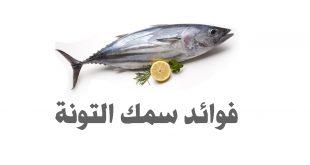 صورة فوائد لا تعرفها عن سمك التونة ،معلومات عن سمك التونة